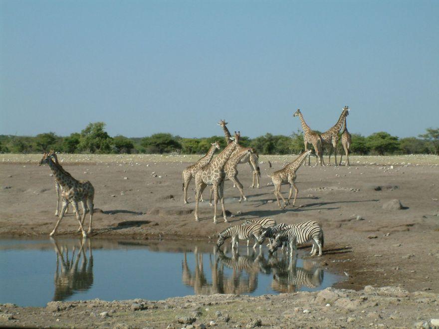 Waterhole Etosha National Park