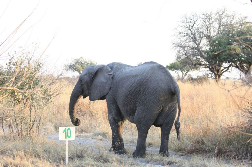Self-drive in the Okavango Delta