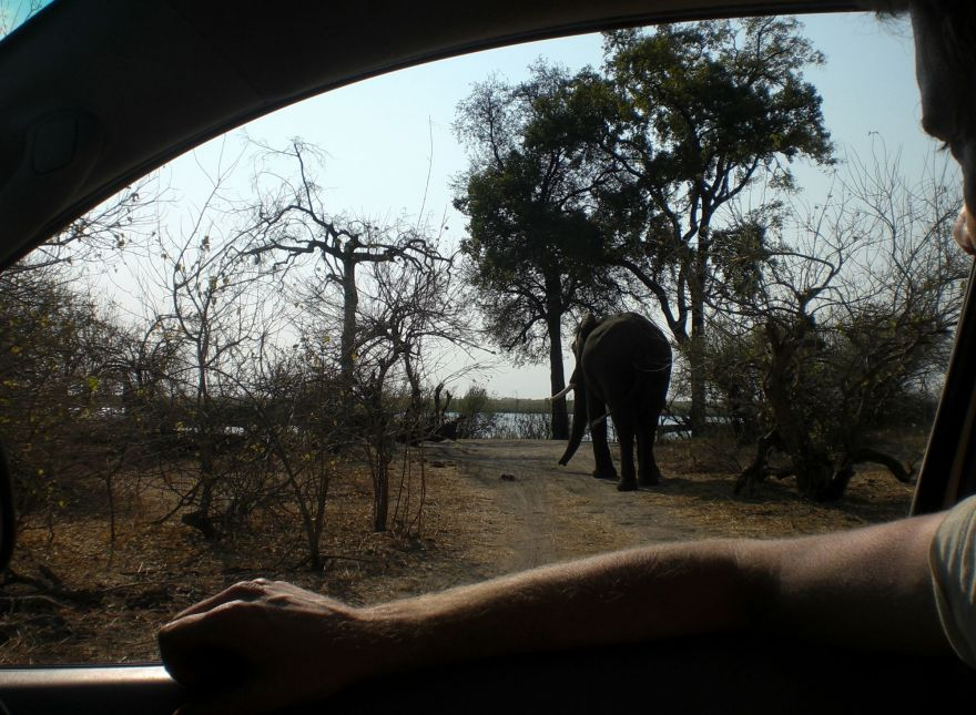 Elephant at campsite
